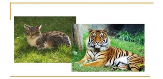 gatto-tigre